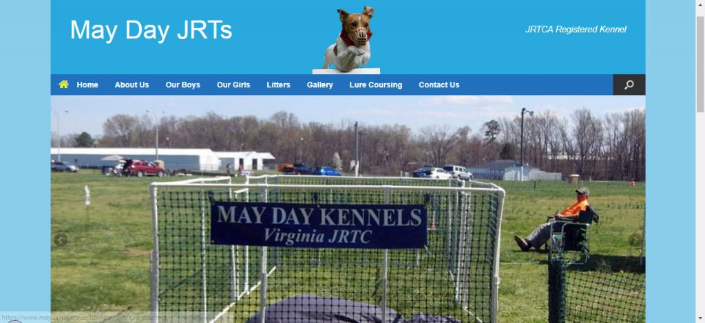 may Day Jack Russell terriers
